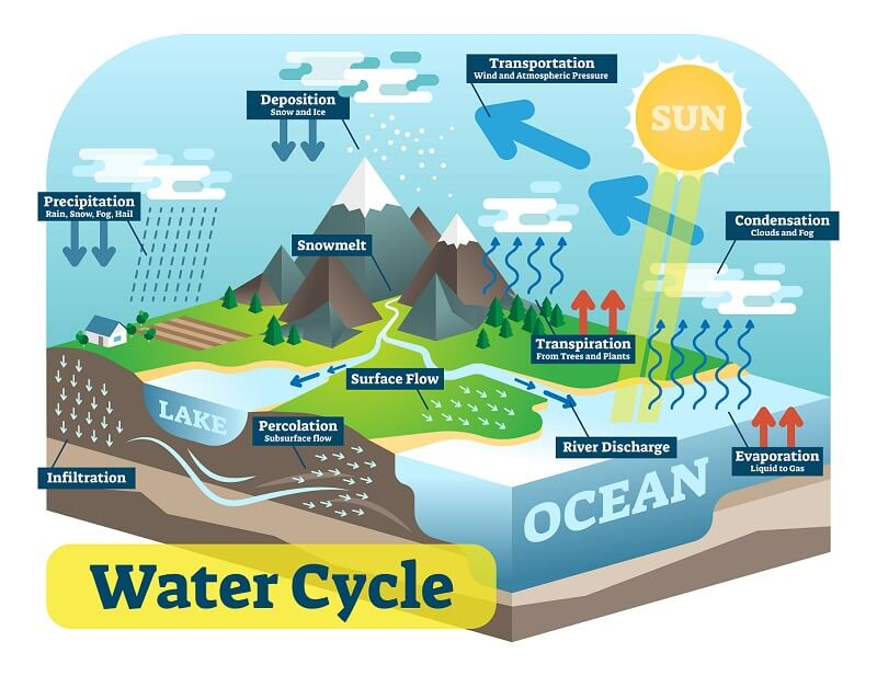 Ecosystem - Water cycle
